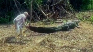 Bolivian River Guide Forms Unlikely Friendship With 13-Foot-Long Caiman