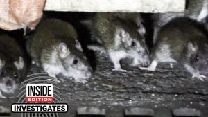 Are Outdoor Dining Structures Attracting Hordes of Rats to Restaurants?