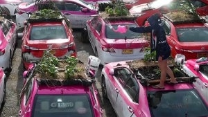 Thai Taxi Cooperative Turns Old Cabs Into Vegetable Gardens in Bangkok