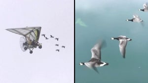 Visually Impaired Woman Soars in Microlight With Flock of Geese in French Alps