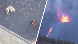 Drones Drop Food to Dogs Trapped by Erupting Volcano in Spain