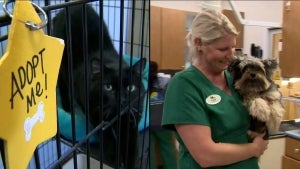 Veterinarians Are Overwhelmed After Pandemic Pet Adoption Surge