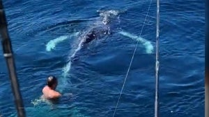 California Fisherman Saves Young Whale Caught in Lobster Trap's Rope