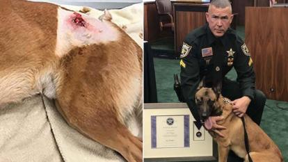 Casper, a K9 officer, took a bullet meant for his human partners