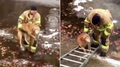 Firefighter Jesse McCullough rescues a 10-year-old golden retriever from a freezing creek.