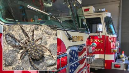 Man trying to kill wolf spider sets fire to his home.