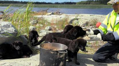 Puppies found on an island