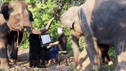 Elephants crowd around the pianist as he plays a classical tune.