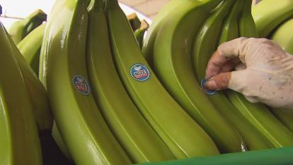 Inside Edition tracked its own special shipment of bananas from Ecuador to New York.