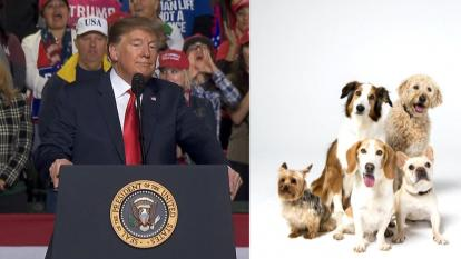What kind of dog would complement Donald Trump?