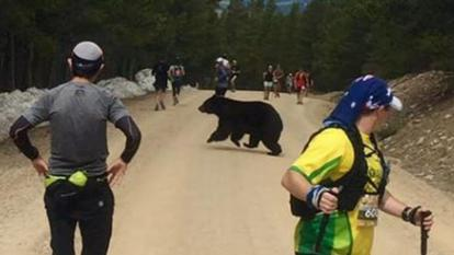 No one seemed particularly upset about the bear running in front of them.