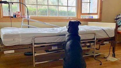 Moose sits by his late owner's hospital bed