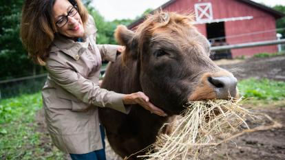 Mountain Horse Farm in the Finger Lakes region of New York offers guests the chance to cuddle with cows.