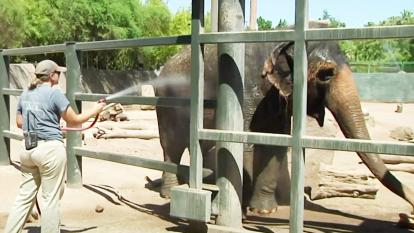 Zookeepers help their animals stay cool with water hoses and ice treats.