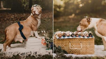 Pickles shows off her pregnant belly and her litter of pups in a maternity photo shoot.