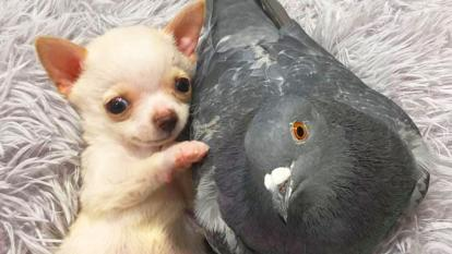 A puppy and a pigeon