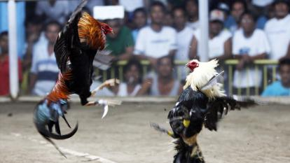 Cockfighting in the Philippines has been temporarily banned amid the coronavirus pandemic.
