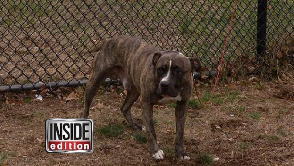 Police Shooting Dogs | Inside Edition