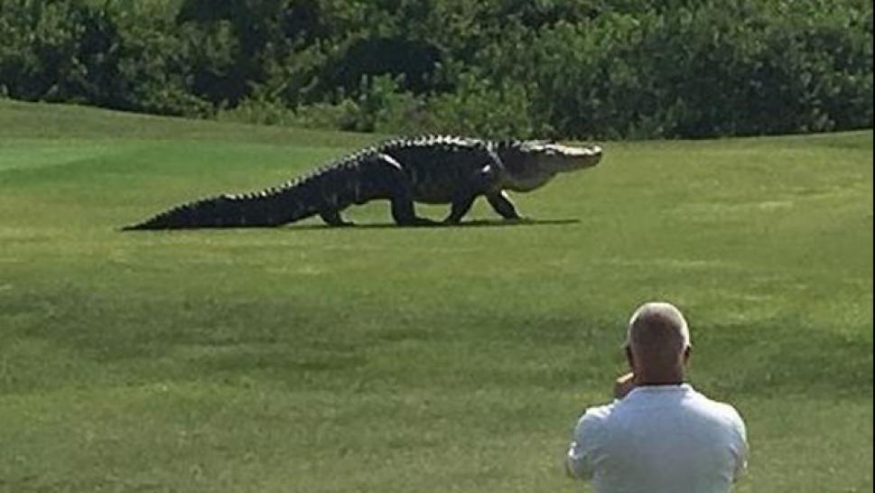 Why Alligators Attack And How To Avoid An Encounter With