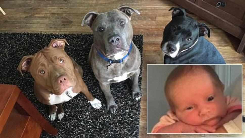 3-Week-Old Dies in Dog Attack After Being Left Alone With