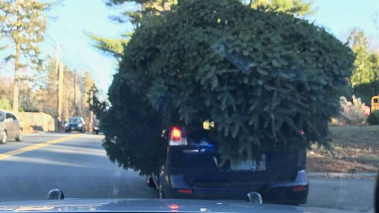 Compact Christmas Trees