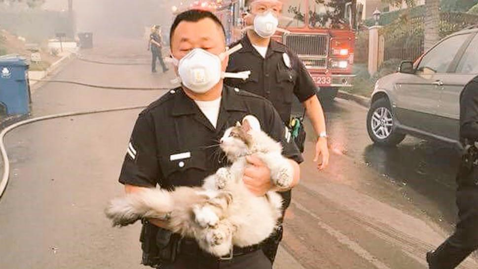 An unidentified LAPD officer rescues a cat during the wildfire evacuation.