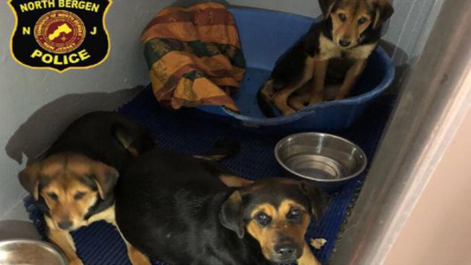 Police were called after someone spotted the Rottweiler mix and her puppies huddled together on a dirty blanket.