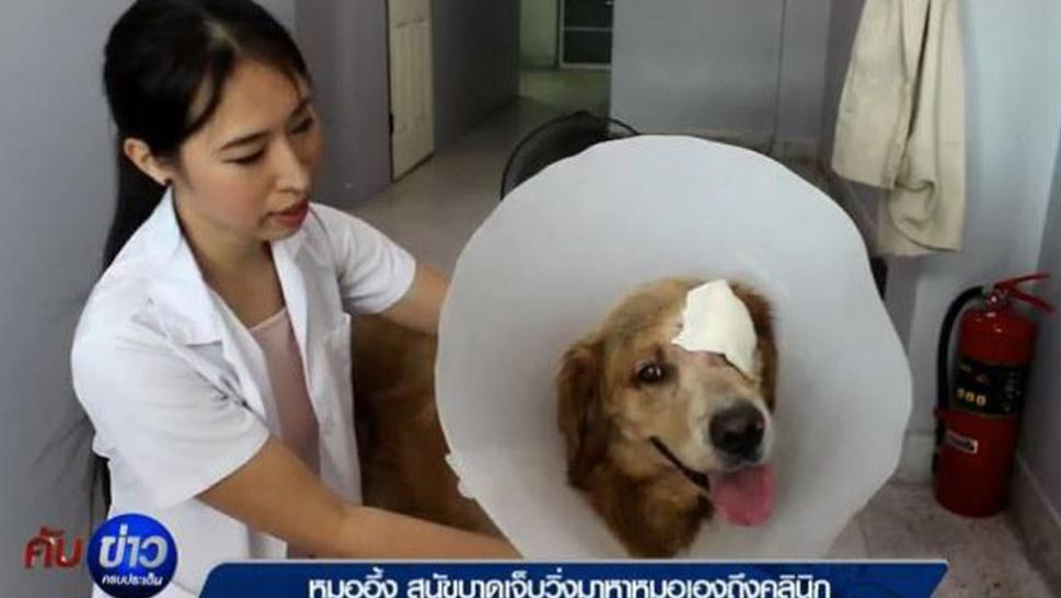 A Thai dog took itself to the vet.
