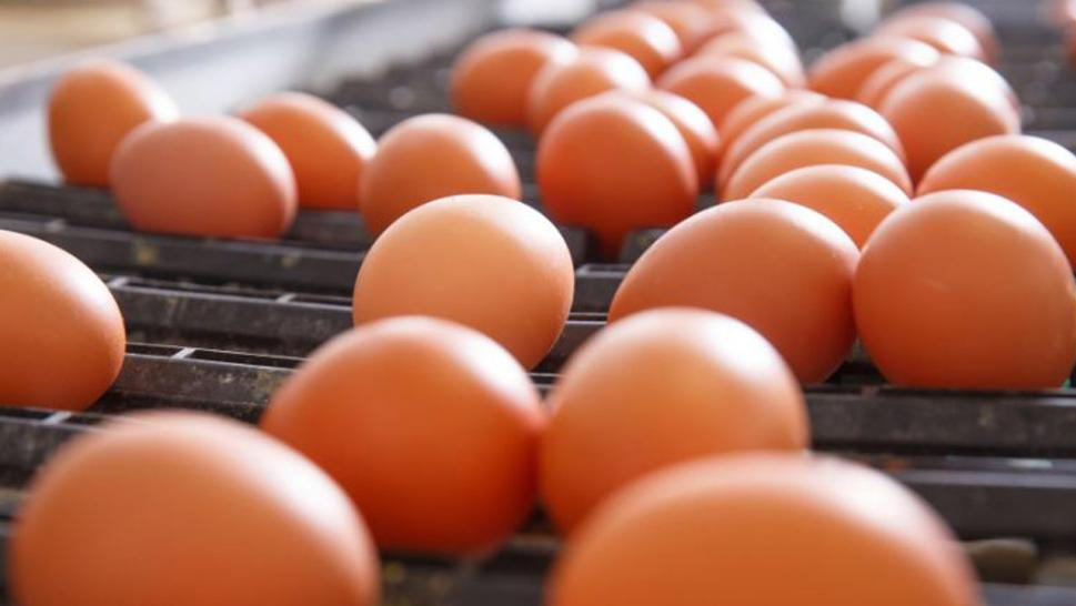 Farm linked to egg recall infested with rodents, according to a government report.