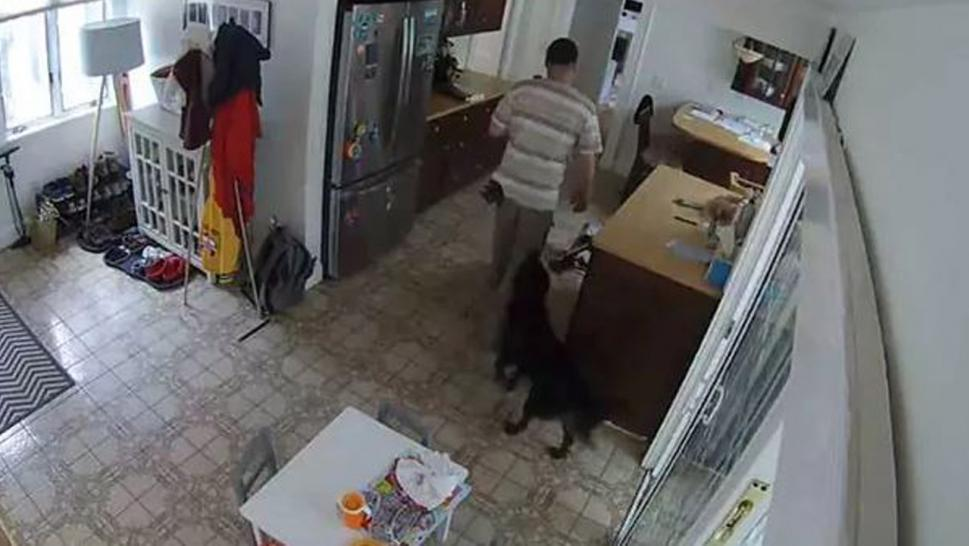 A burglar received nothing but tail wags from dog home alone.