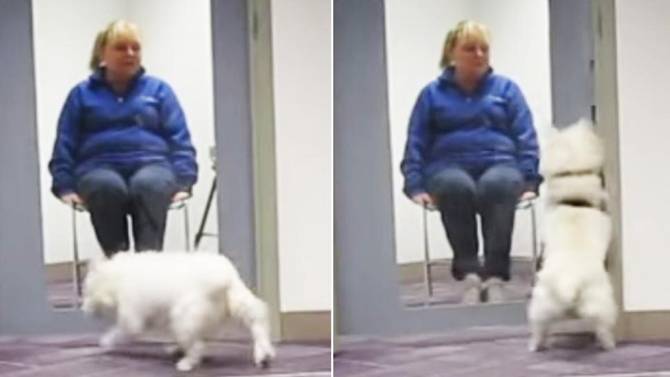 A pup rushes to its owner when it hears her crying.