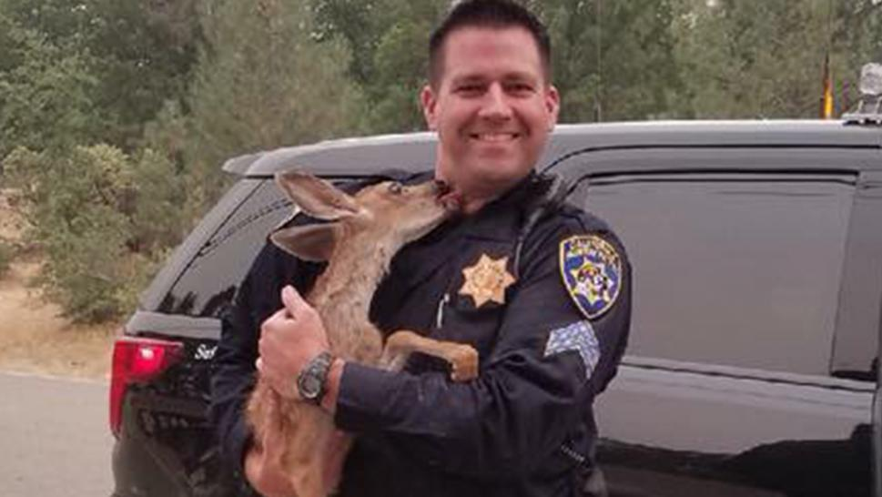 Deer thanks officer with kiss