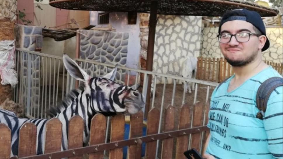 zebra or donkey?
