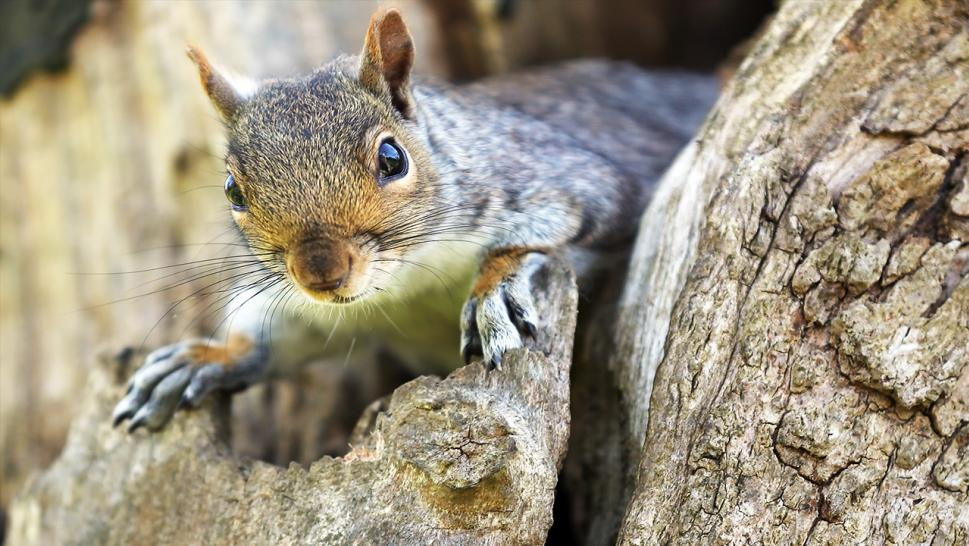 Man dies from extremely rare 'SQUIRREL DISEASE' after eating rodent's BRAINS