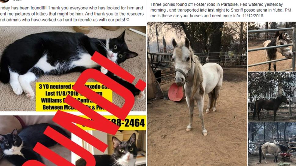 Pleas for missing pets