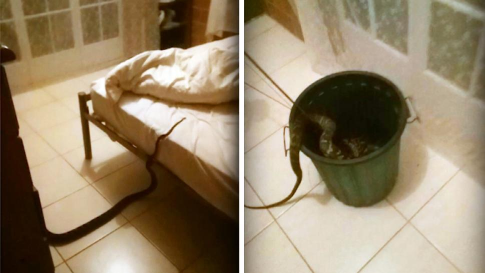 Snake found in a woman's bed