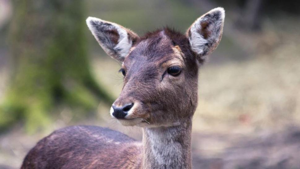 "Deer poacher ordered to repeatedly watch ""Bambi"" during his jail sentence."