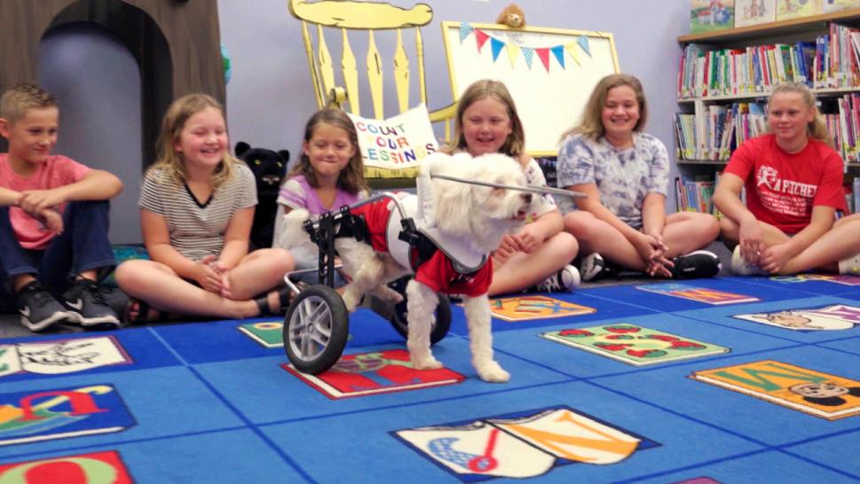 Noah the anti-bullying dog