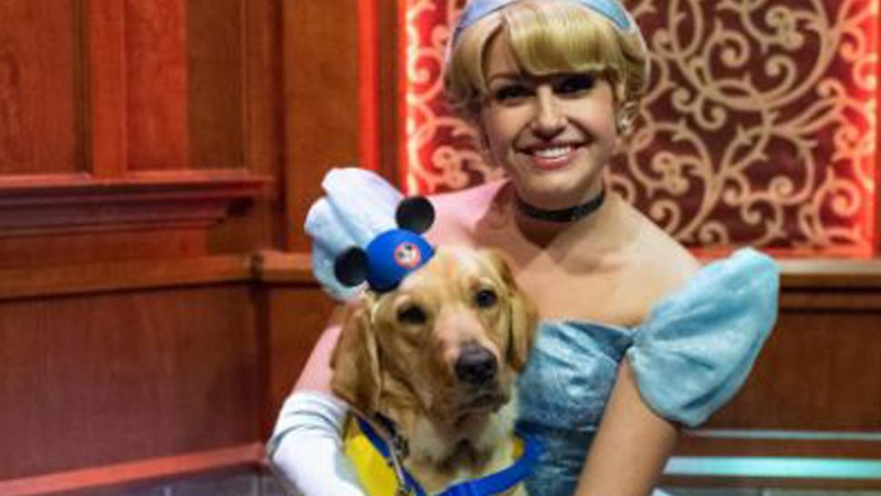 Cinderella falls in love with service dog.