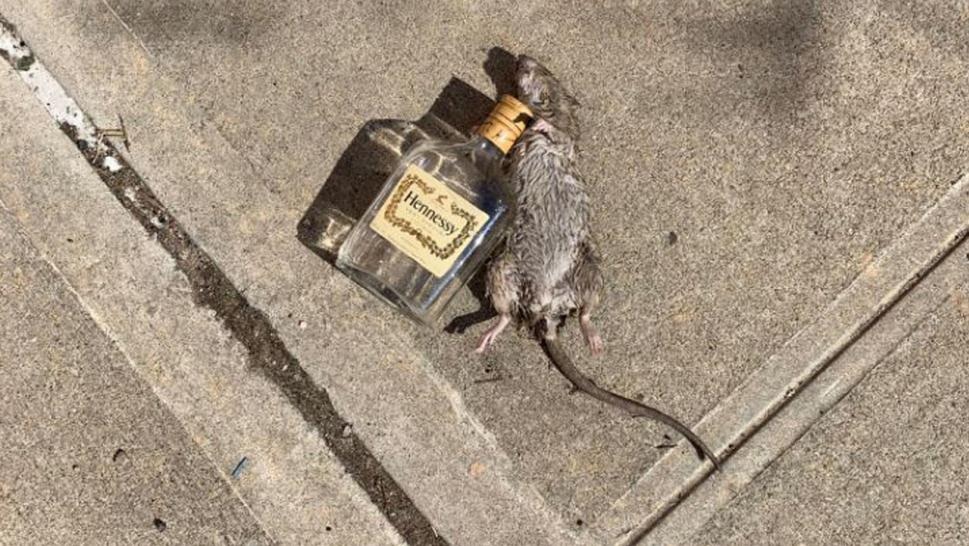 """Henny Rat"" captured the internet's attention."