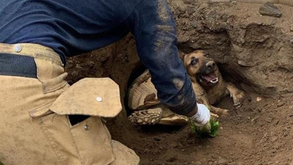 A dog and a tortoise had to be rescued after getting trapped in a tunnel.