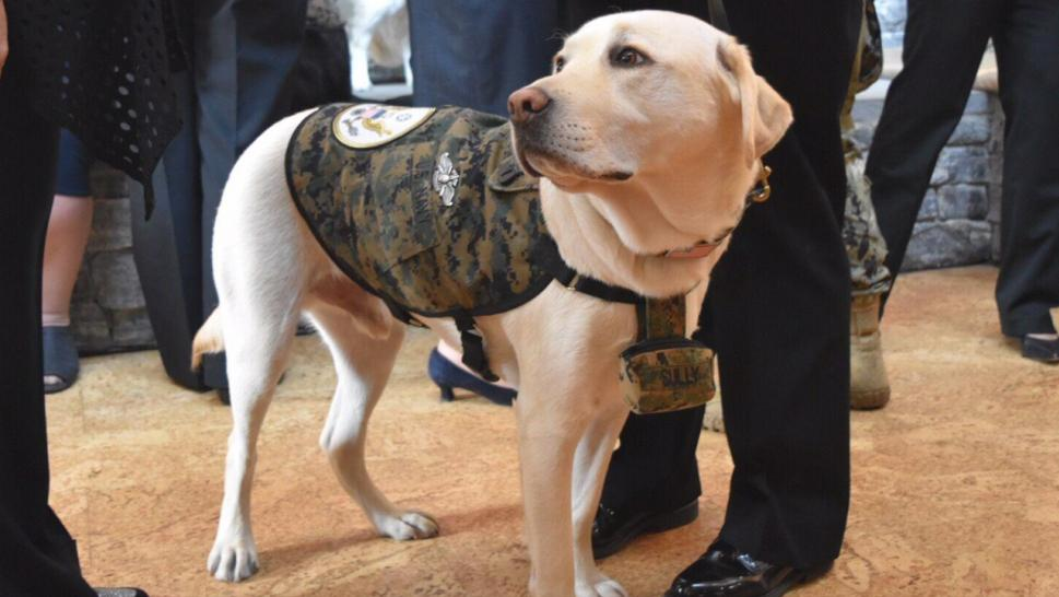 Sully was George H.W. Bush's service dog.
