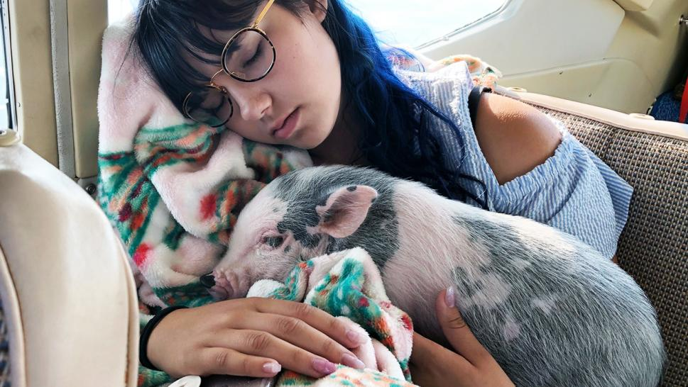 Eighteen-year-old Emily Talbot cuddles Pita Peppa during a plane ride.