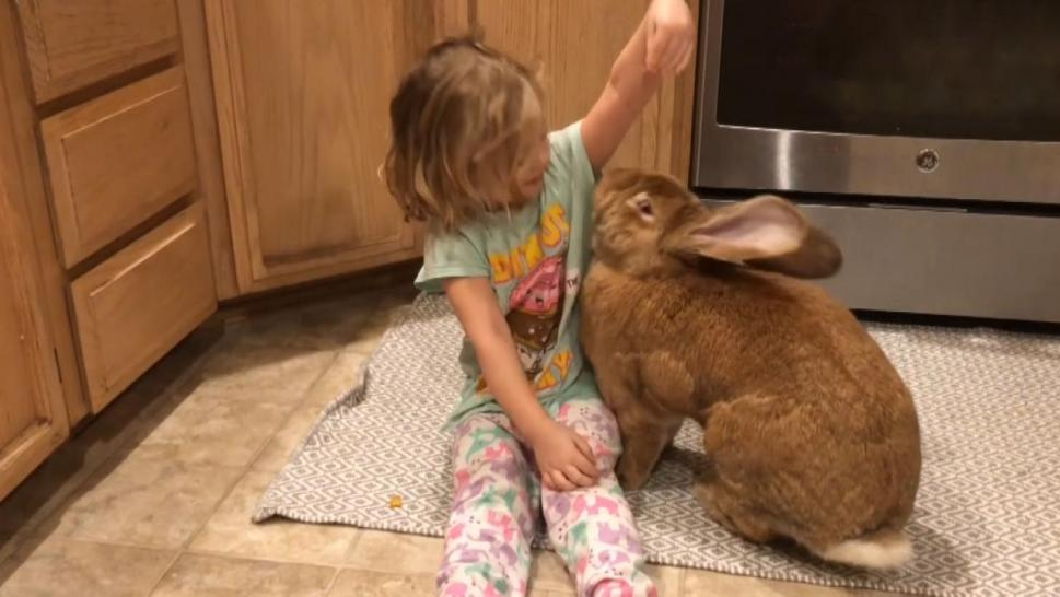 Toddler and rabbit playing together