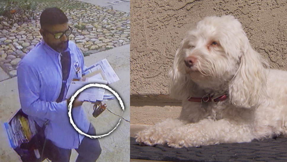 Postal worker caught apparently pepper spraying this dog