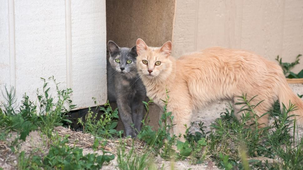 File photo of feral cats