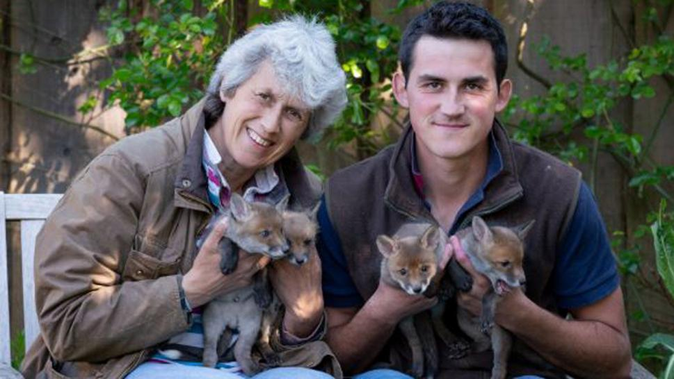 Man Performs C-Section on Pregnant Fox Killed by Car to Save Her Babies