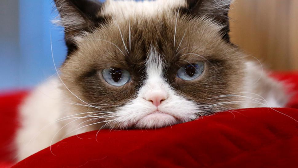 Grumpy Cat has died at age 7.