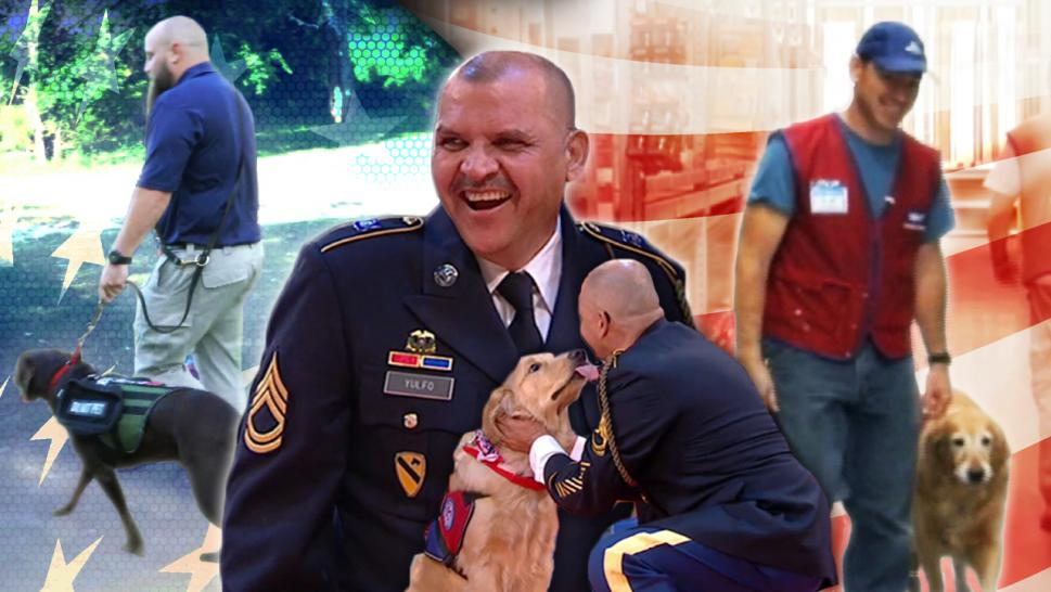 Dogs surprising veterans