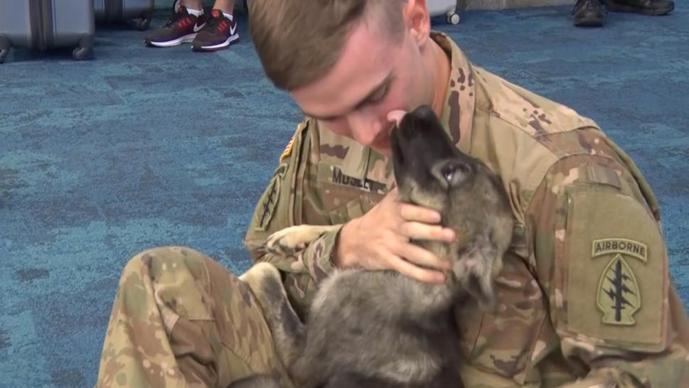 A soldier had an emotional reunion with his puppy rescued in Syria.